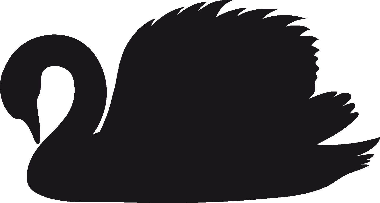 Clipart birds black swan. Png