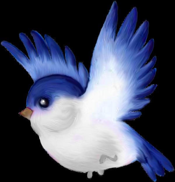 Oiseaux birds png pinterest. Clipart bird body