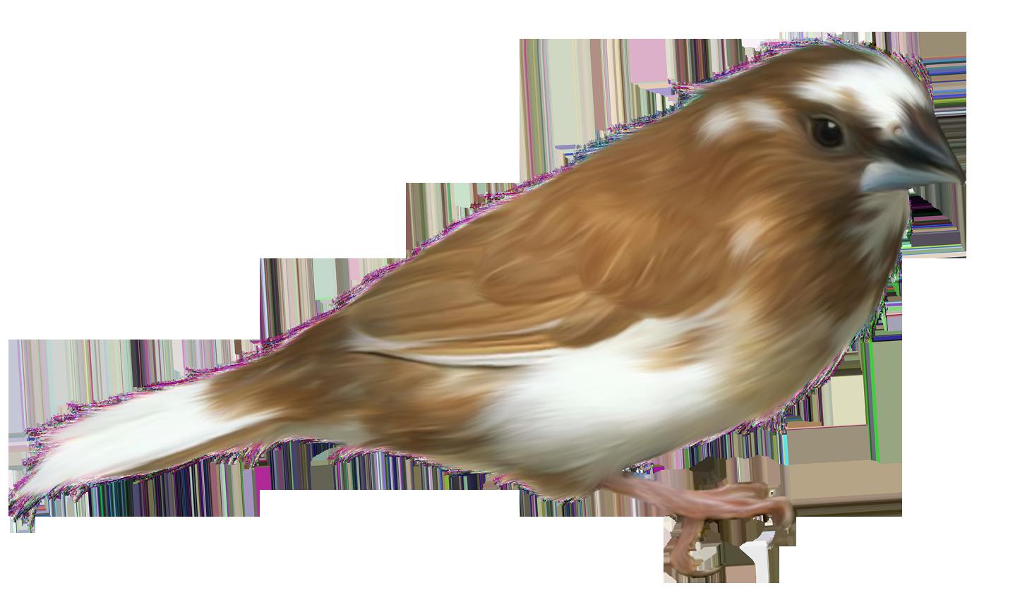 Small bird transparent png. Clipart birds brown