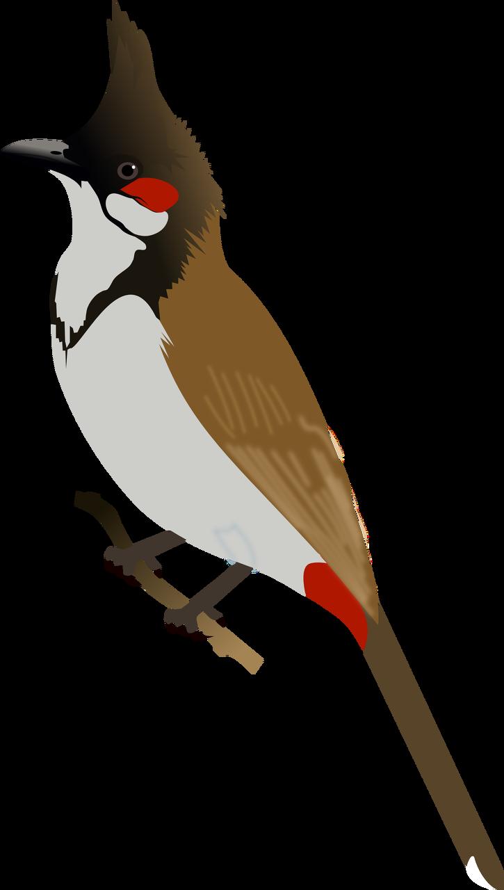 Bird bulbul