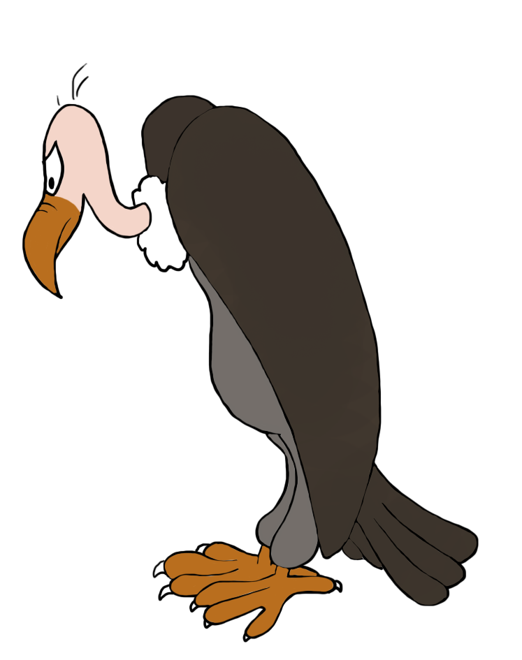 Pelican clipart seagull.  collection of vulture