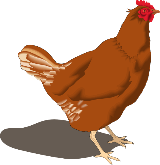 Chicken at getdrawings com. Nest clipart 4 bird