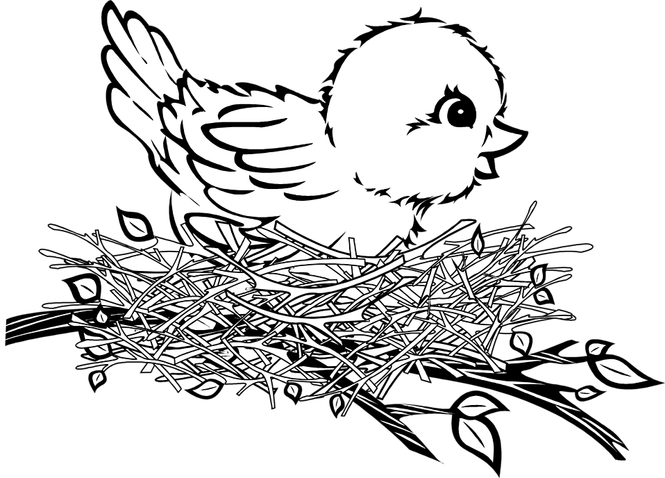 collection of bird. Nest clipart black and white