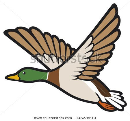Ducks clipart waterfowl. Mallard duck google search