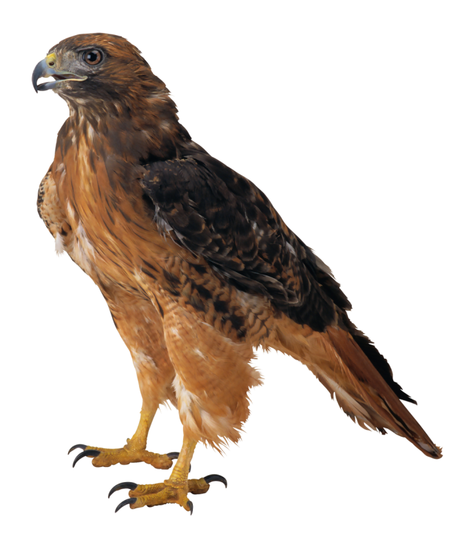 Png best web. Cool clipart falcon