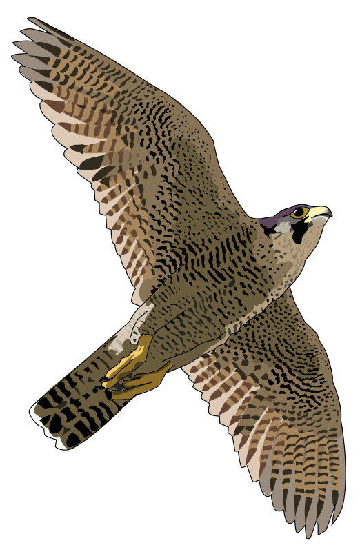 collection of peregrine. Clipart birds falcons