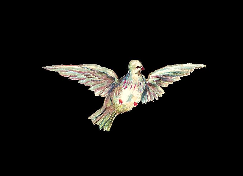 Antique images free clip. Clipart bird fountain