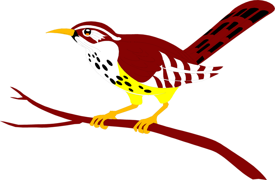 Bird red free stock. Parrot clipart branch clipart