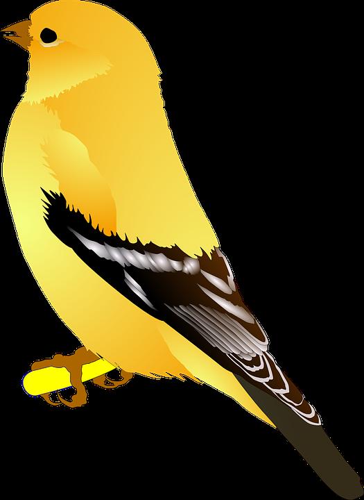 Clipart bird goldfinch. Free image on pixabay