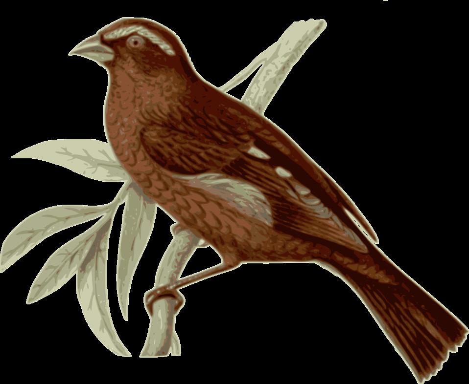 Clipart home bird. Free stock photo illustration
