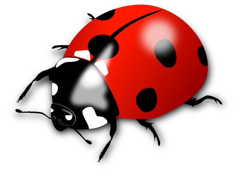 Ladybird medium image png. Insects clipart red bug