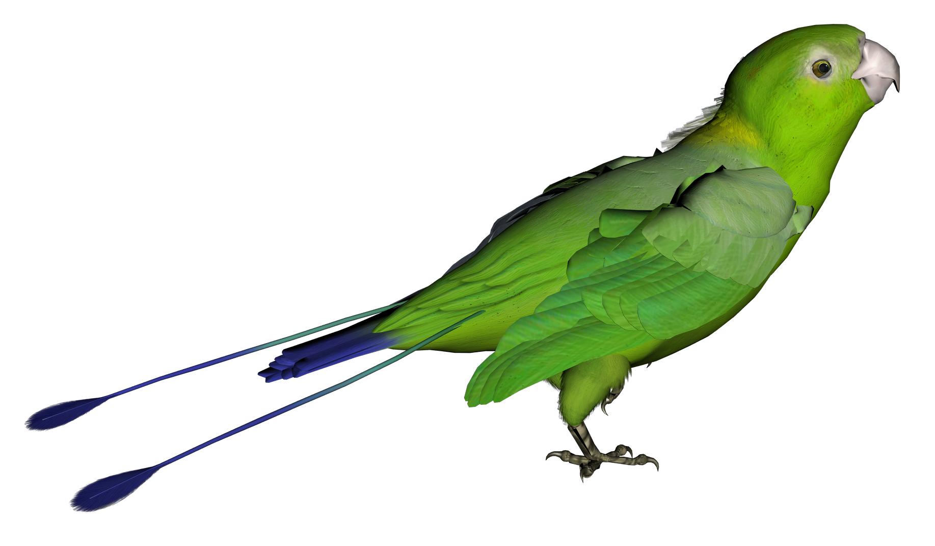 Green png picture gallery. Parrot clipart tail