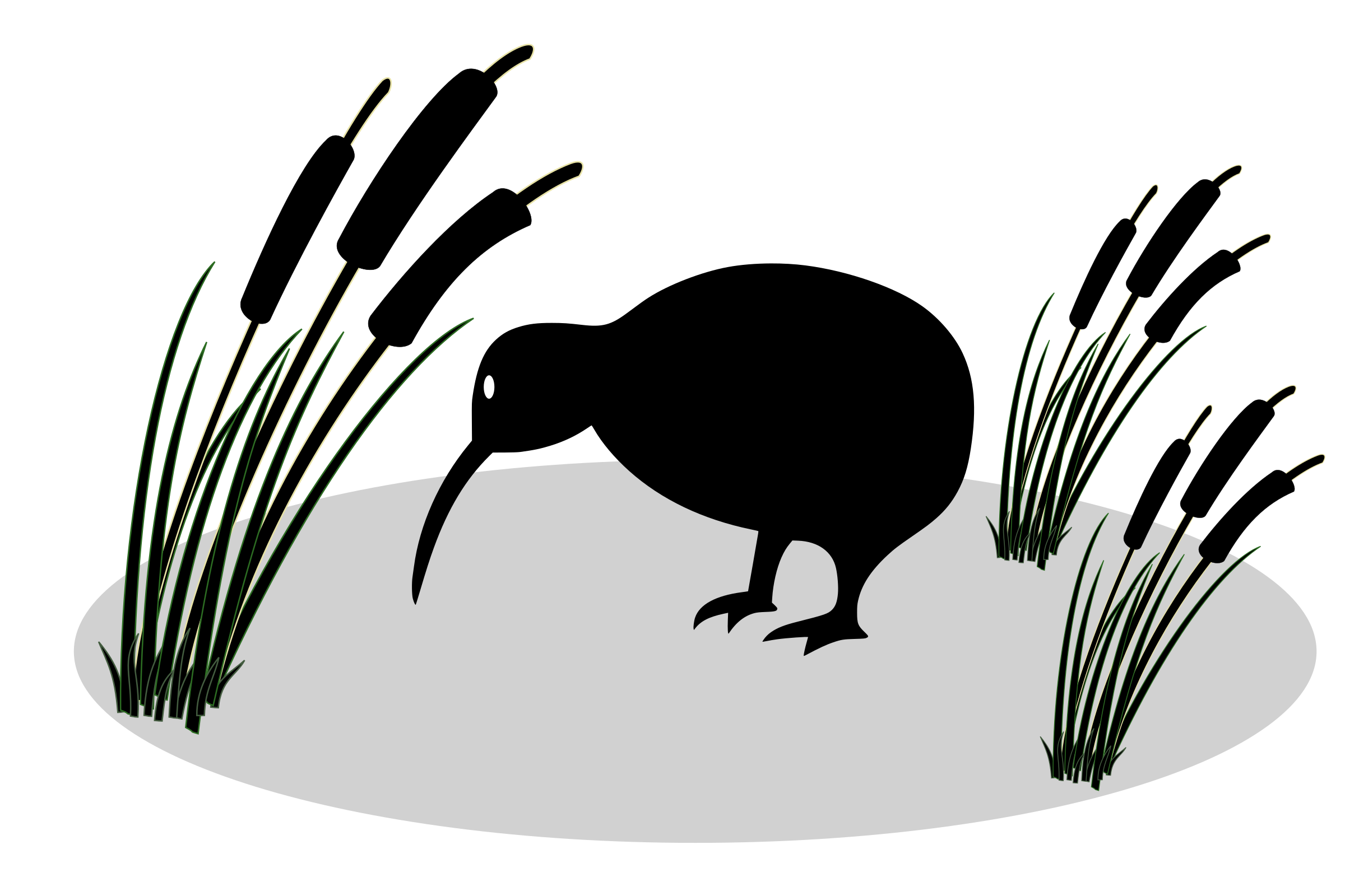 And reed big image. Clipart birds kiwi