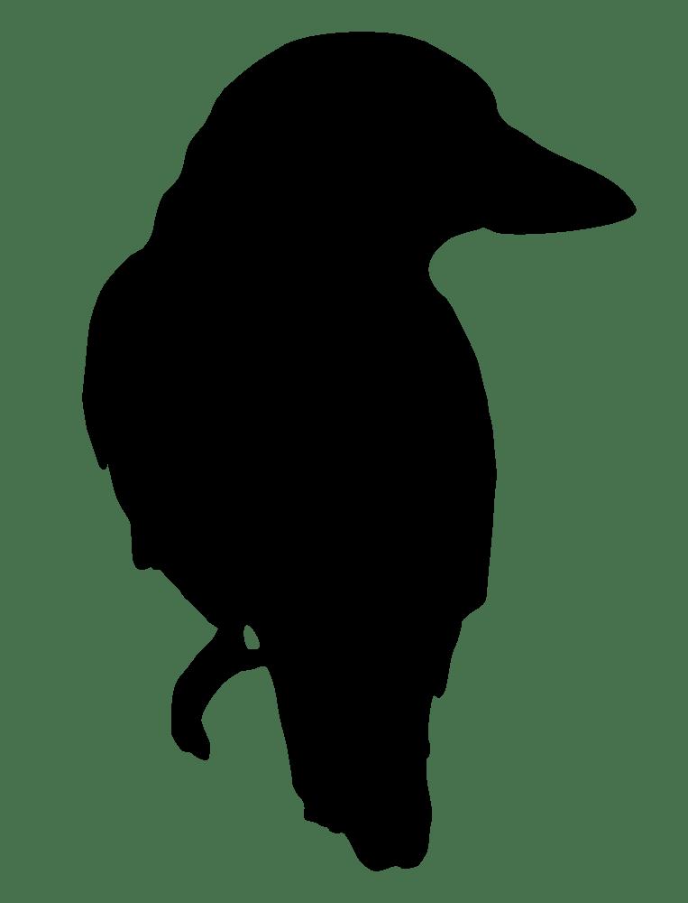 clipart birds kookaburra
