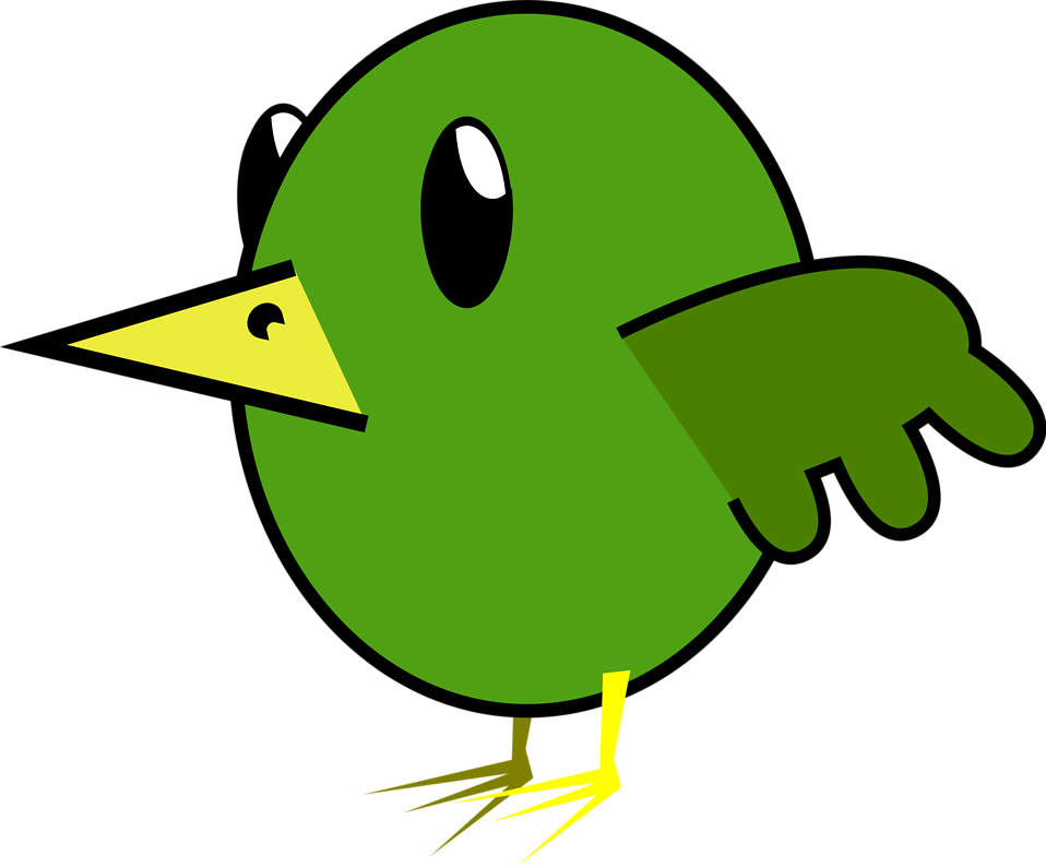 Parrot clipart wild bird. Green free stock photo