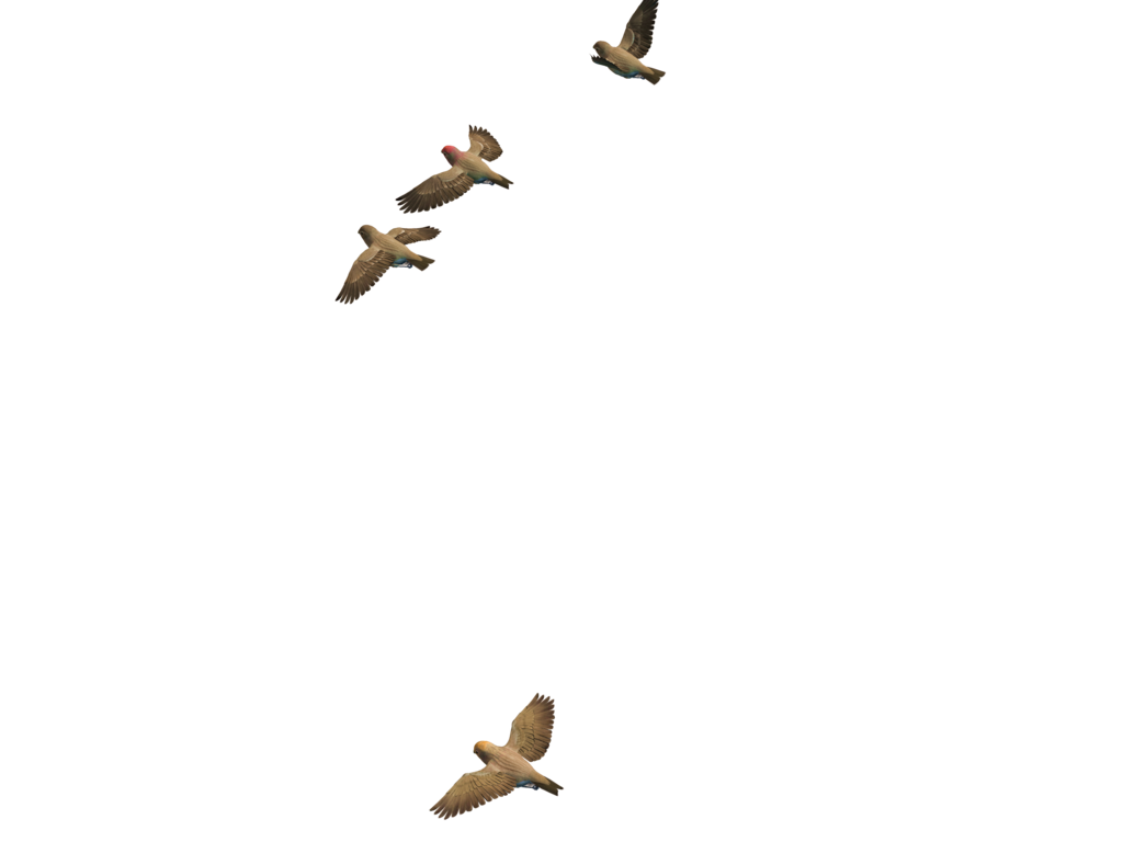 Clipart rock flying. Bird png images transparent