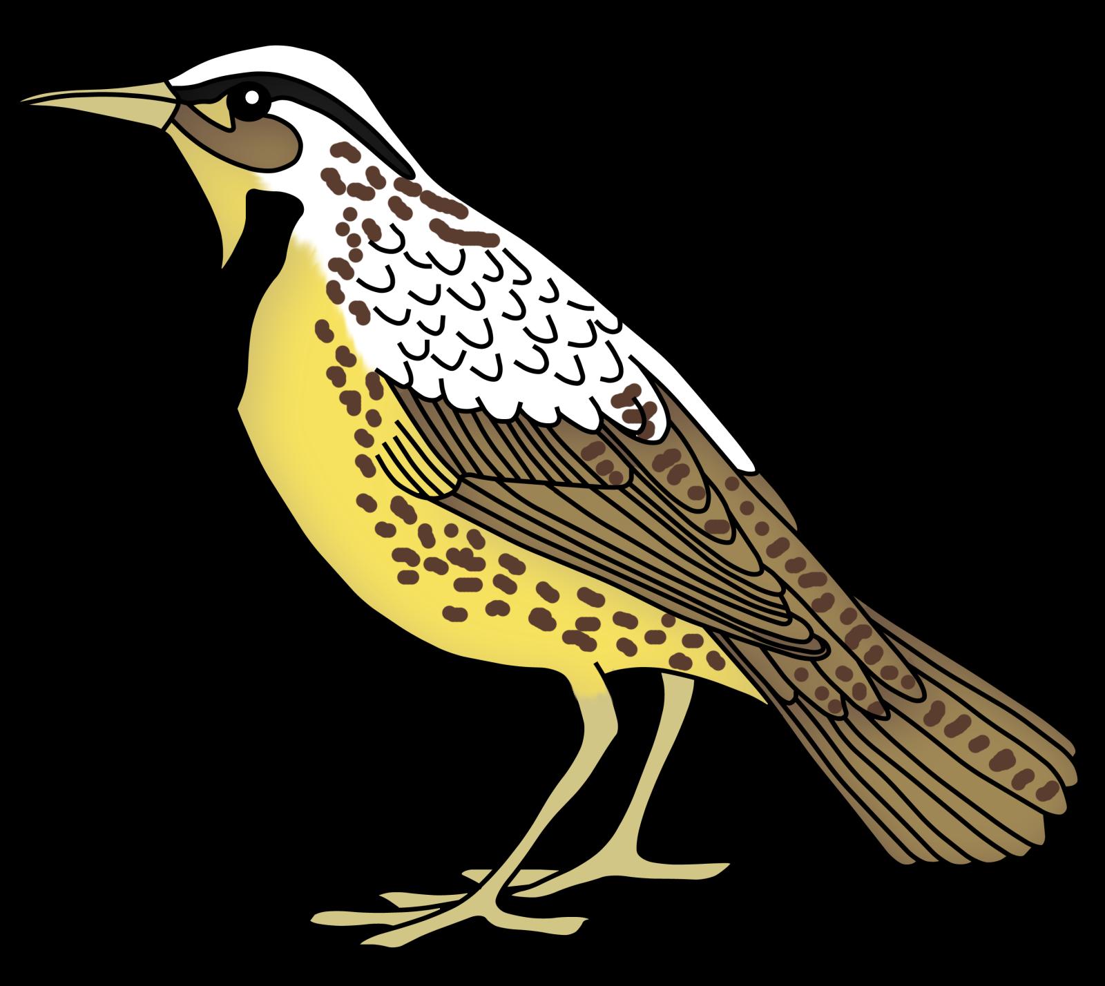 Clipground teacher treasure hunter. Clipart birds meadowlark