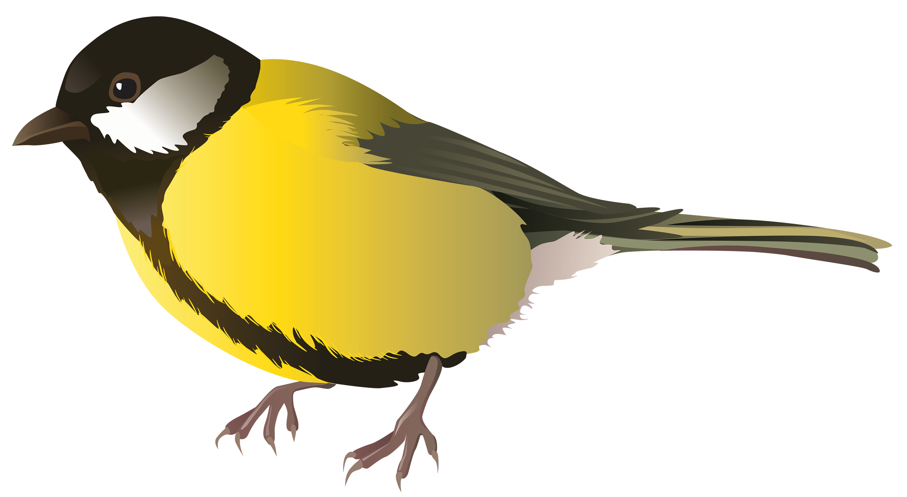 Clipart birds goldfinch. Oriole at getdrawings com