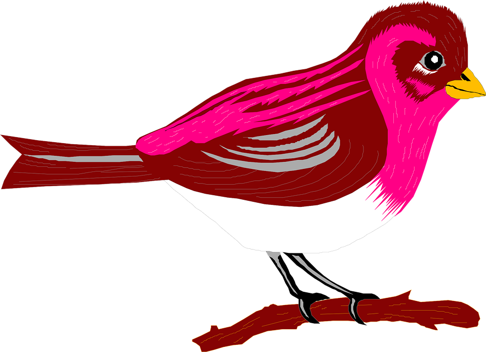 Oriole at getdrawings com. Clipart birds meadowlark