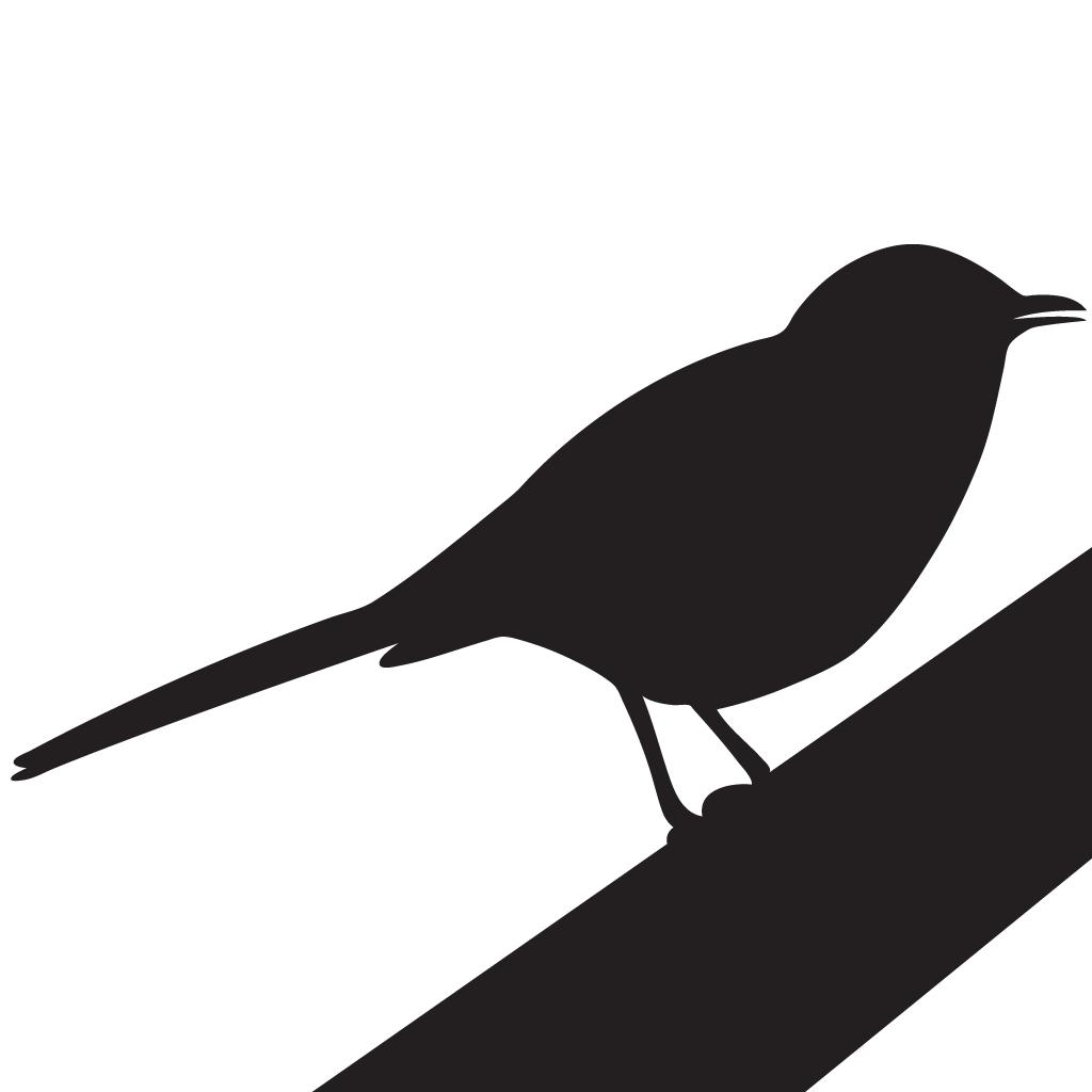 Bird mockingjay
