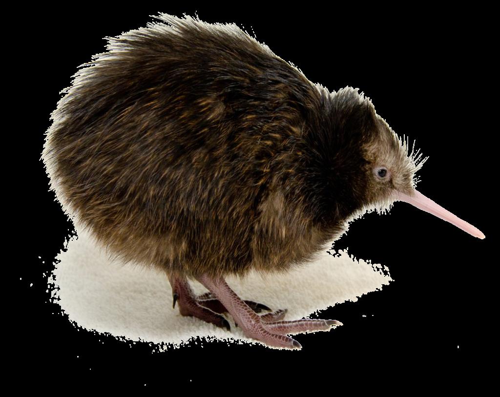 Kiwi png peoplepng com. Cloud clipart bird
