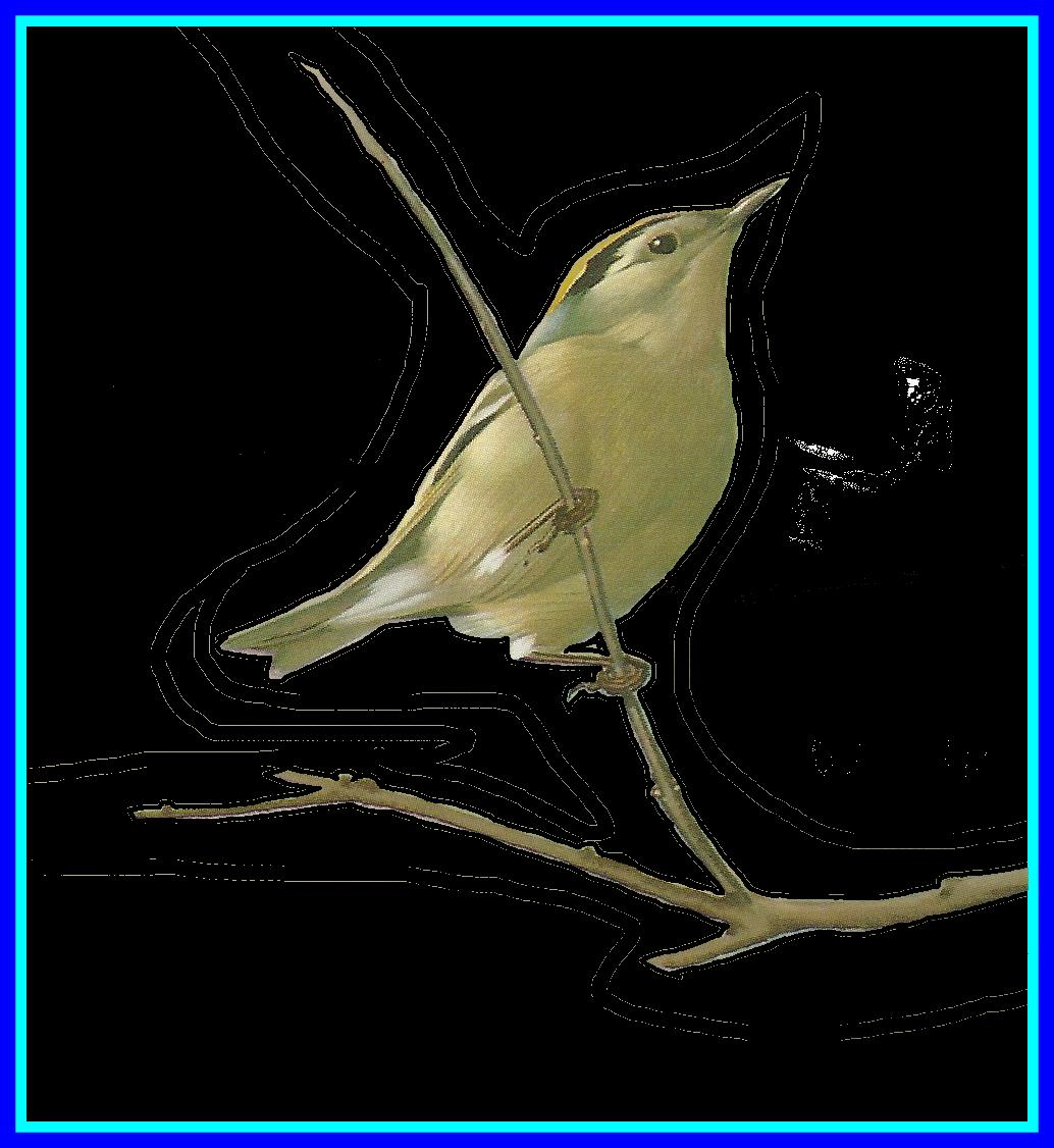 Clipart birds nightingale. The best bird drawing