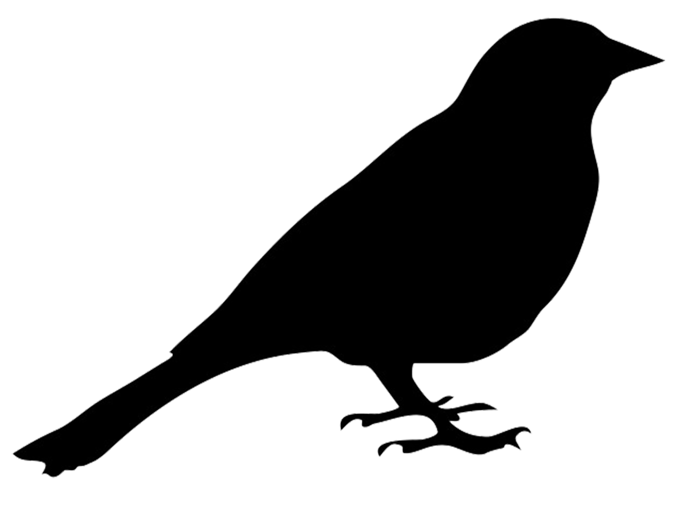 collection of birds. Hummingbird clipart silhouette