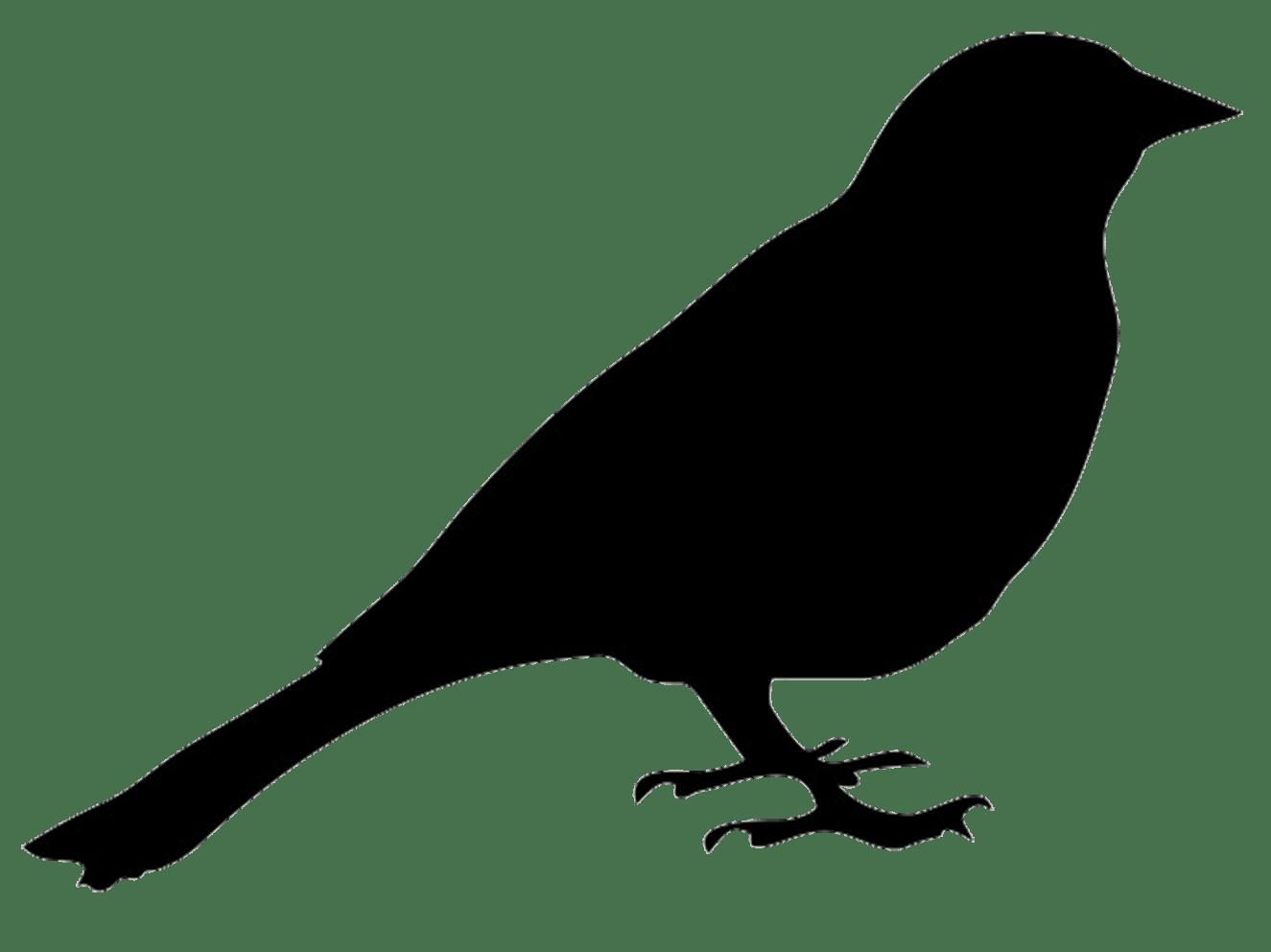 collection of birds. Bird vector png