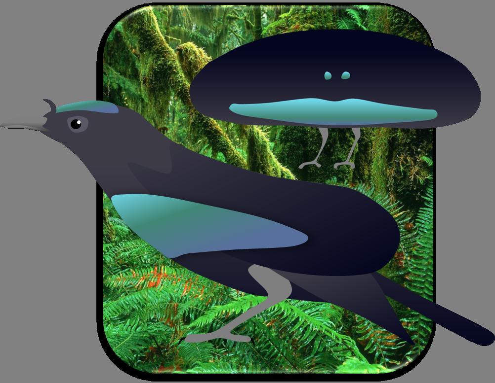 Clipart birds paradise. Superb bird of by