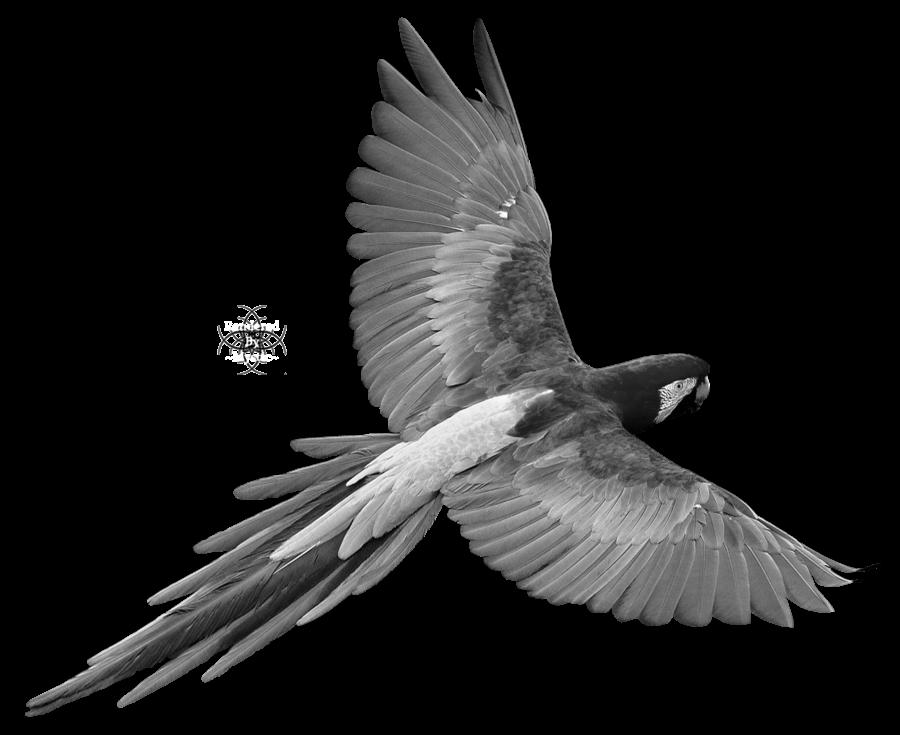 Clipart birds paradise. Of clipartblack com animal