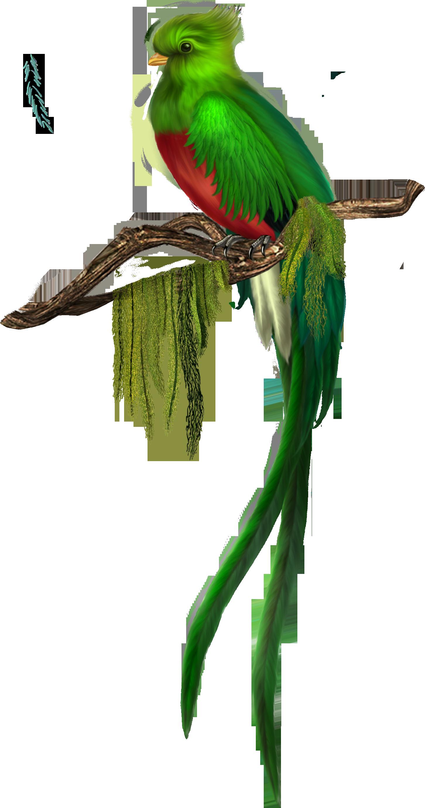 Green bird free gallery. Clipart birds paradise