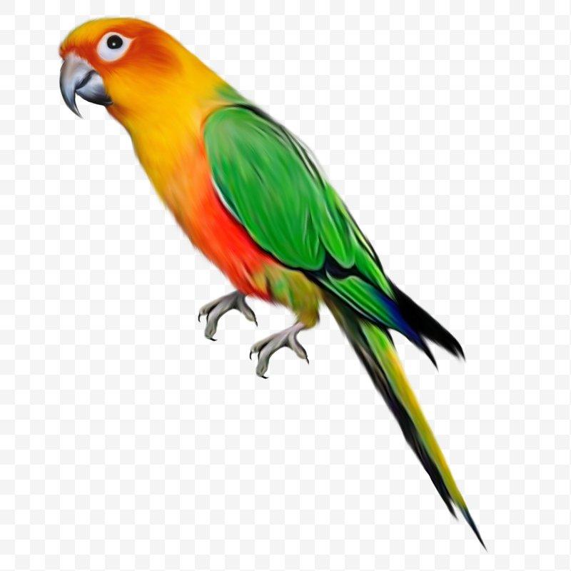 Bird clip art png. Parrot clipart bird's