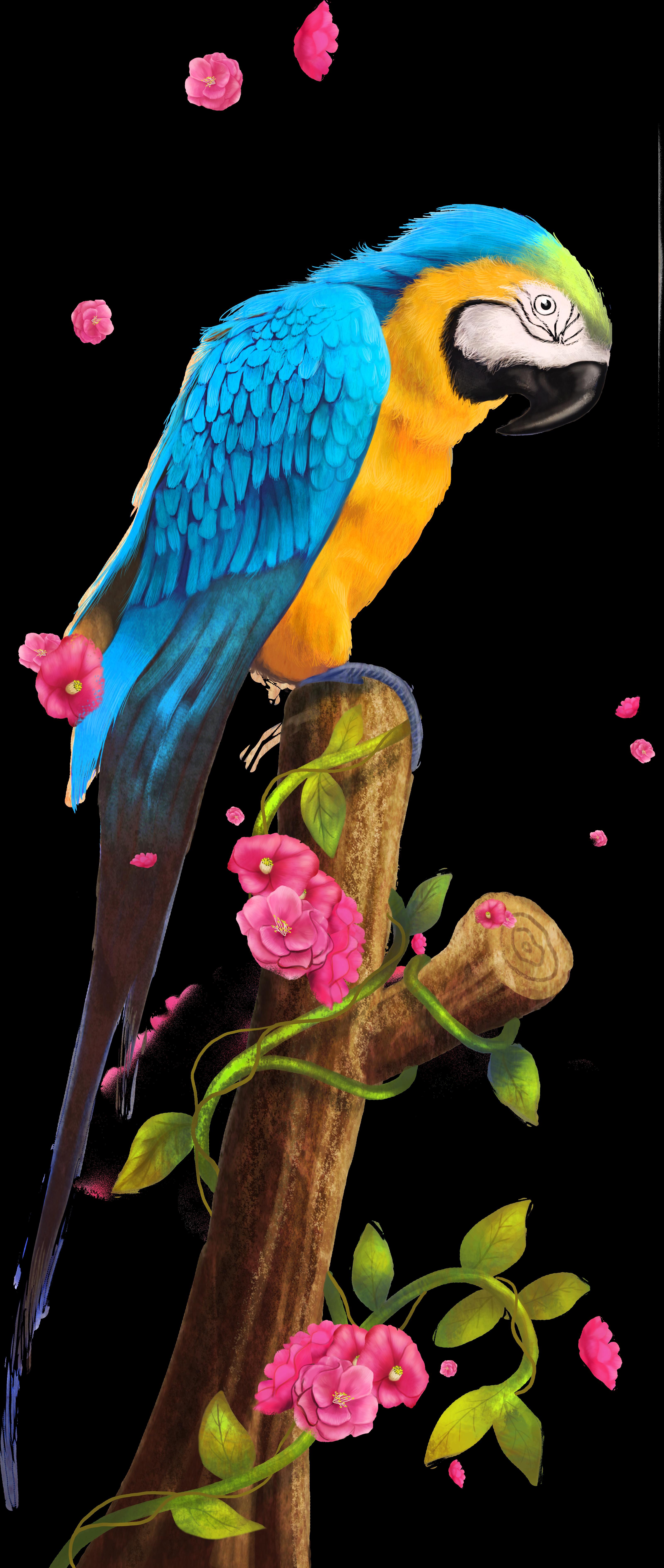 Nest clip art bako. Parrot clipart wild bird