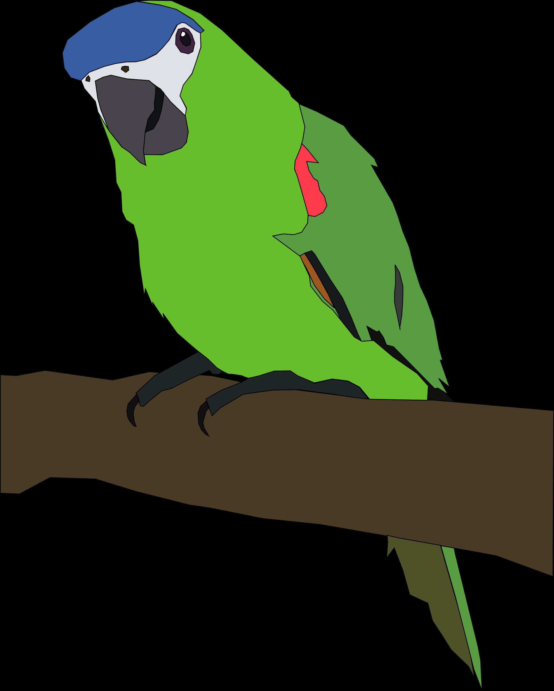 . Parrot clipart parrot head