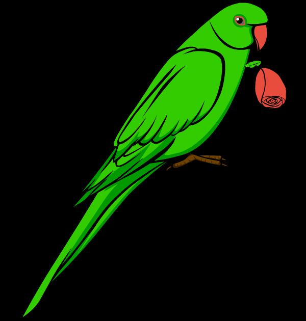parrot clipart diagram