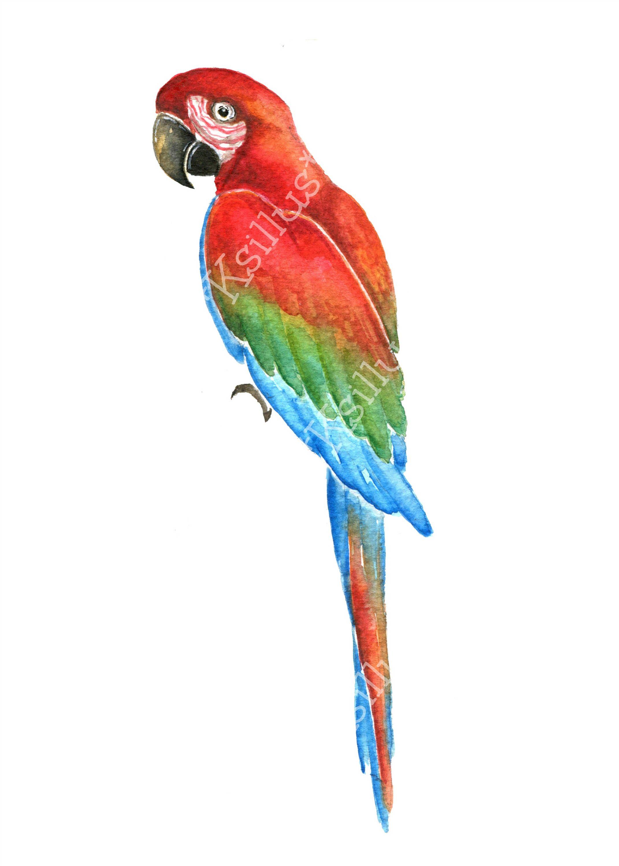 Parrots tropical pattern artwork. Parrot clipart rainforest parrot