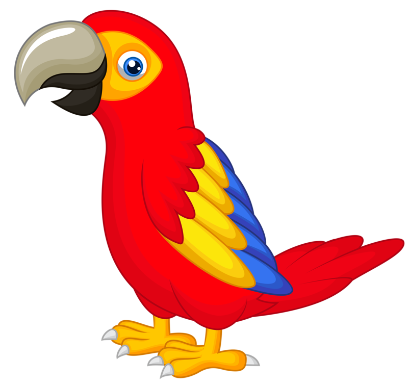 Parrot Drawing With Colour at GetDrawings