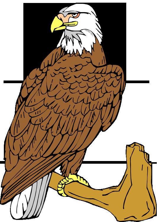 Falcon clipart large bird. Free eagle