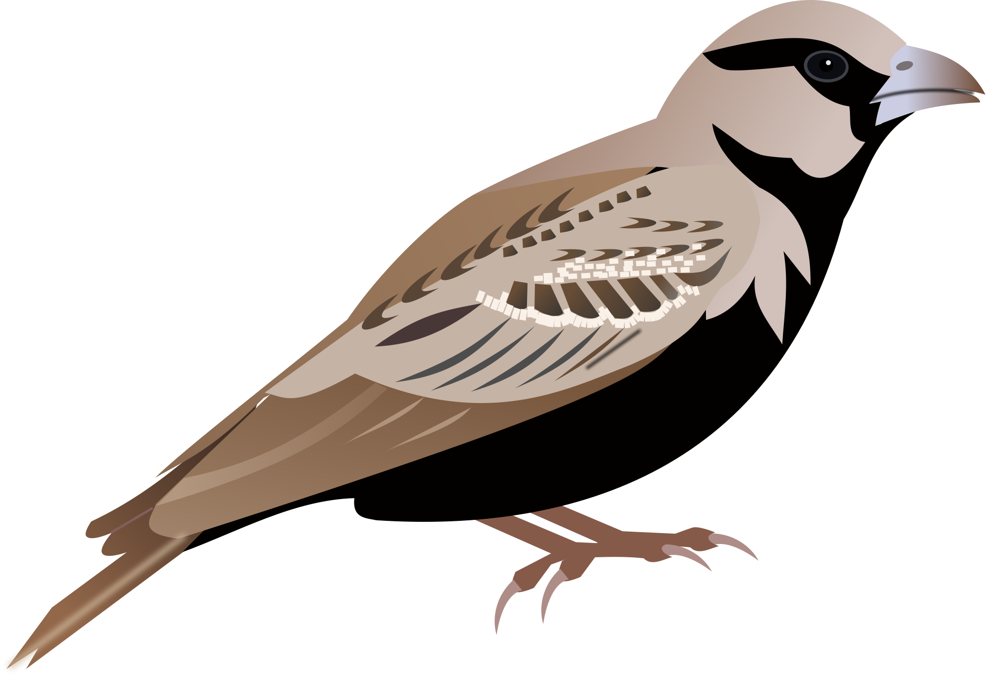 Nest clipart sparrow nest. Png images free download
