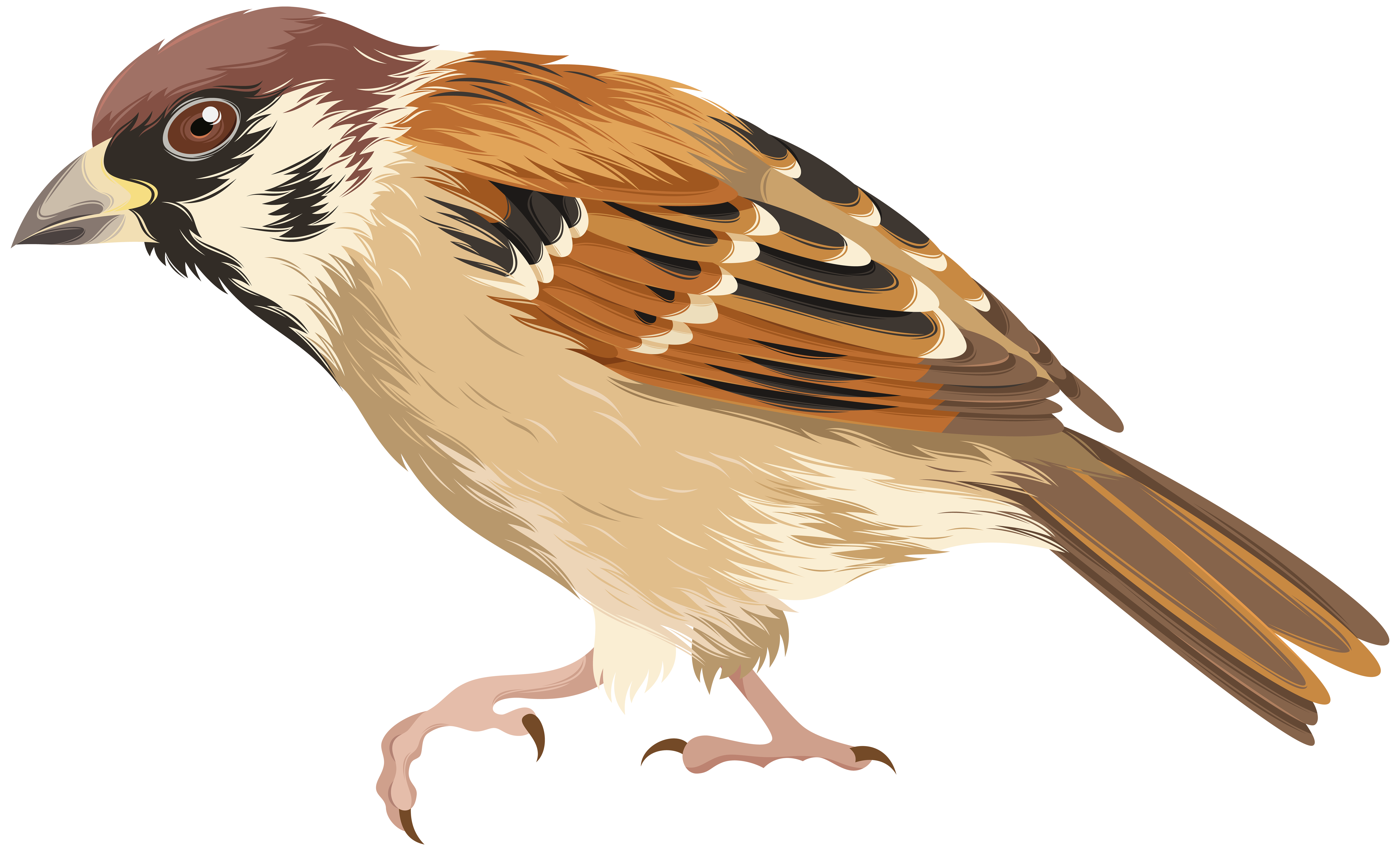 collection of png. Falcon clipart sparrow