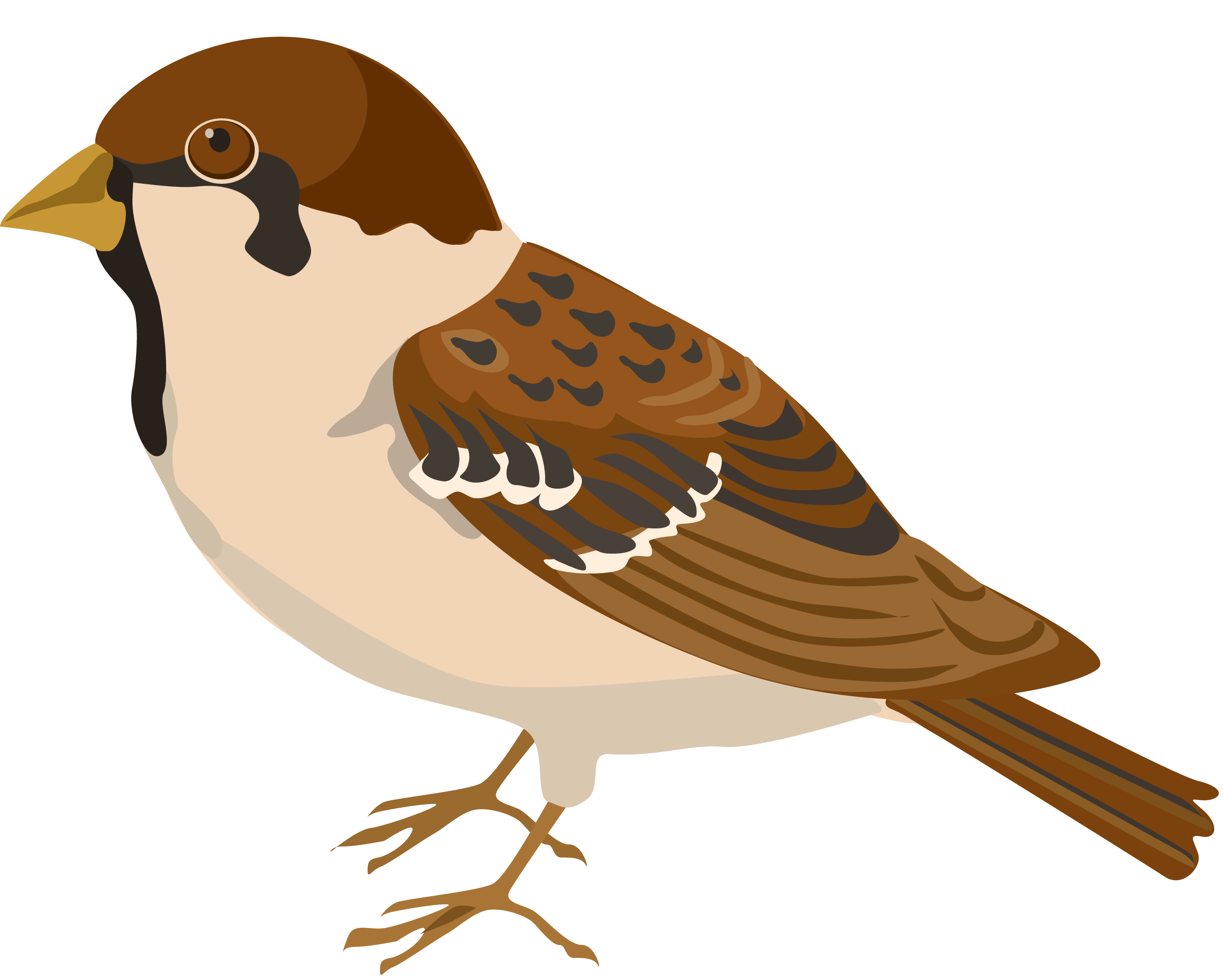 nest clipart sparrow nest #131579824