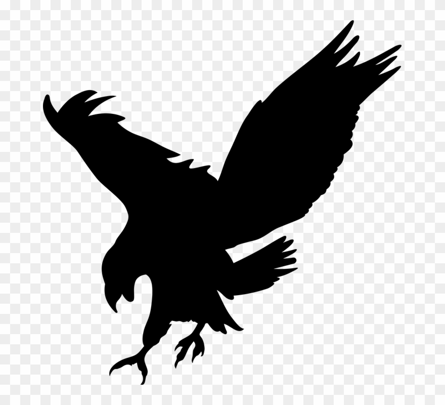 Clipart birds prey. Bird of transparent png