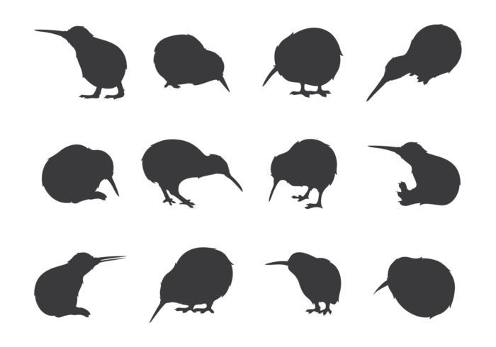 Bird silhouettes vector png. Narwhal clipart kiwi