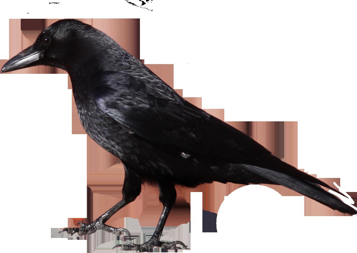 Studiobin farewell pinterest. Crow clipart victorian