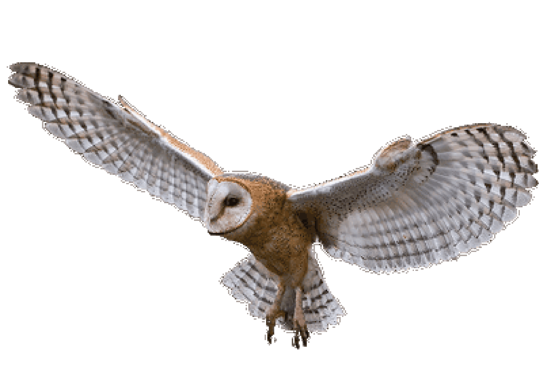 Clipart birds red kite. Wildlife watch september by