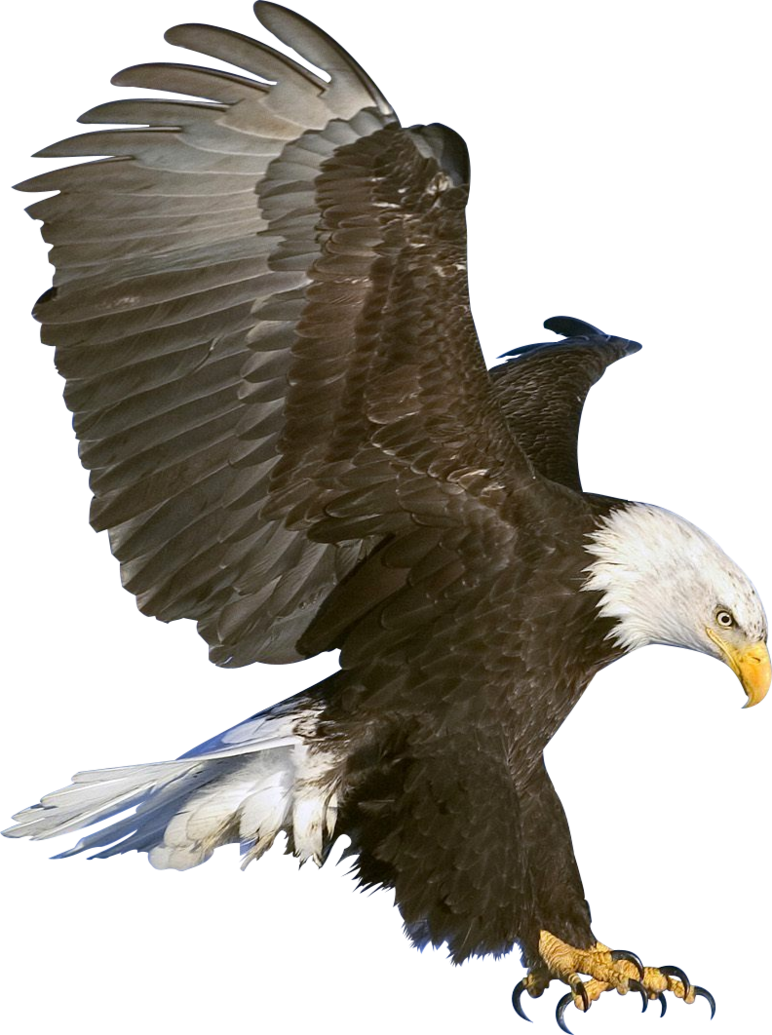 In flight render by. Snake clipart eagle