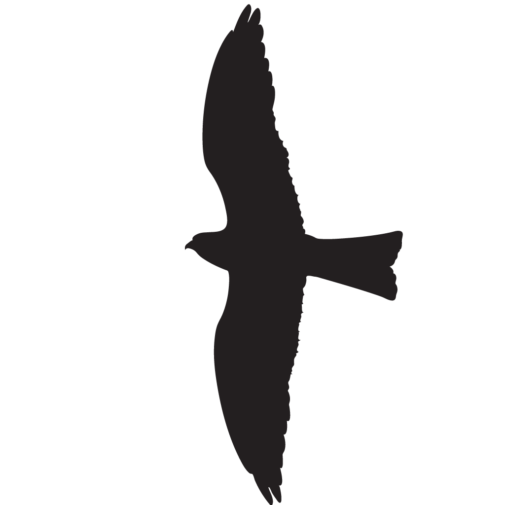 Clipart birds red kite. Silhouette at getdrawings com