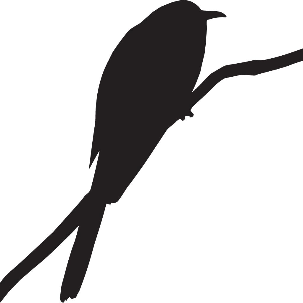 Clipart bird roadrunner, Clipart bird roadrunner ...