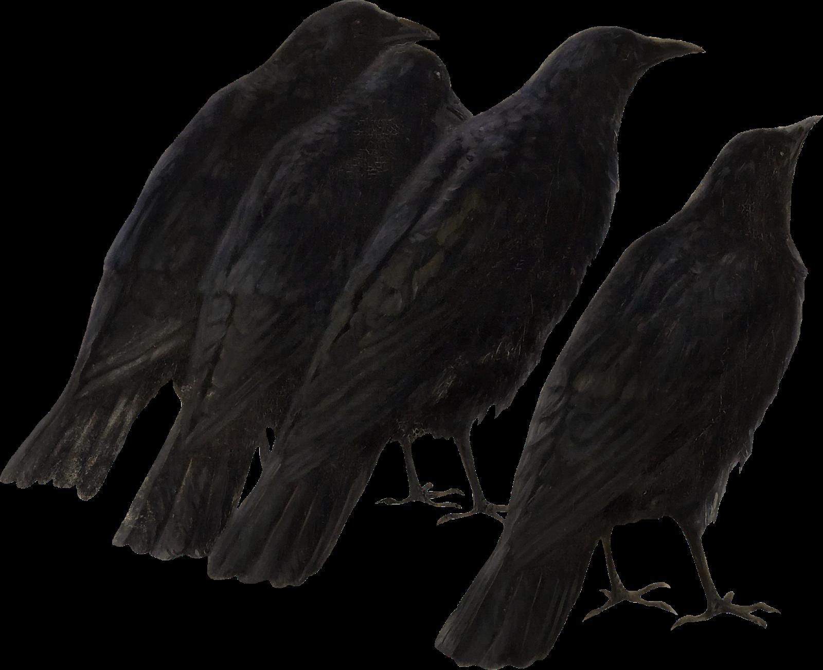 Itkupilli spiritusmortisunited crows png. Skeleton clipart crow