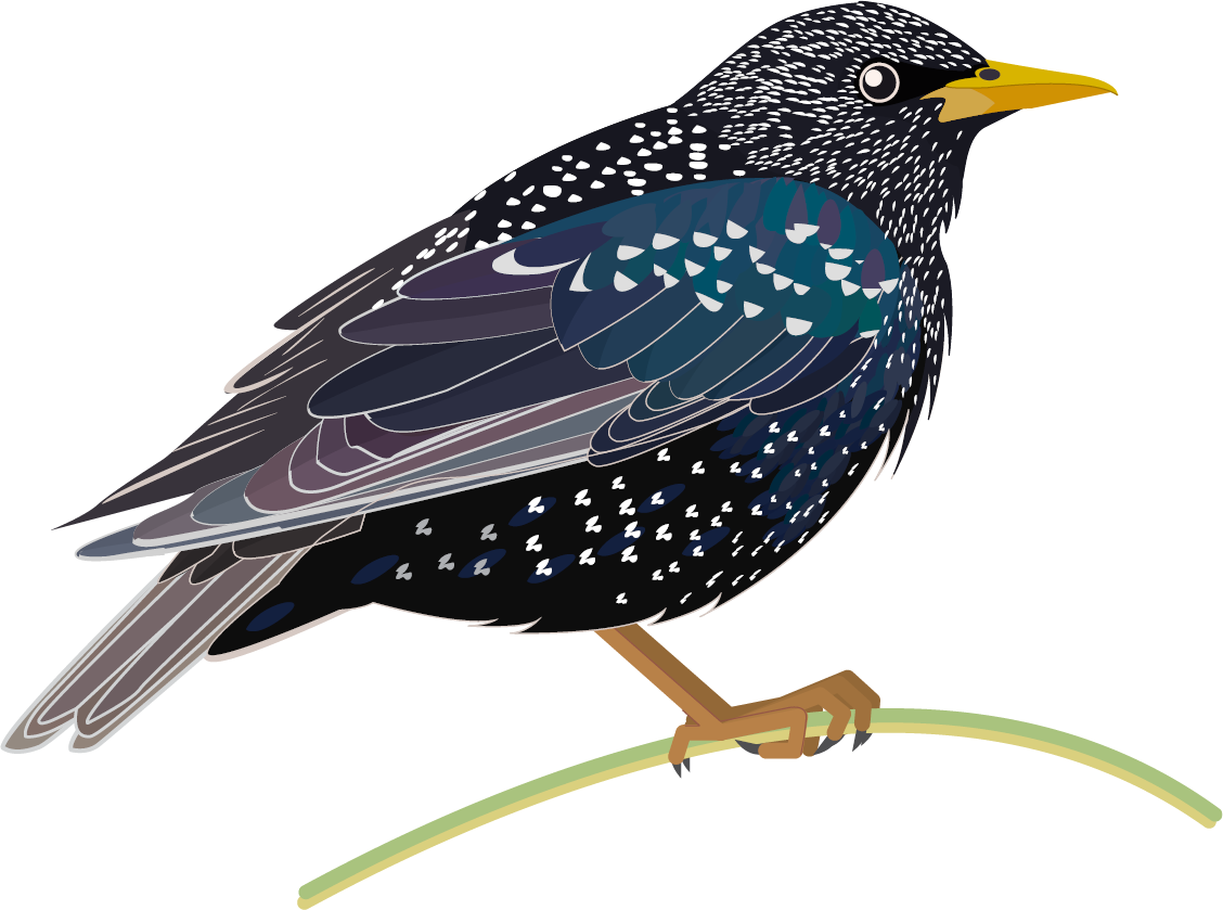 Clipart bird starling, Clipart bird starling Transparent FREE for download  on WebStockReview 2020